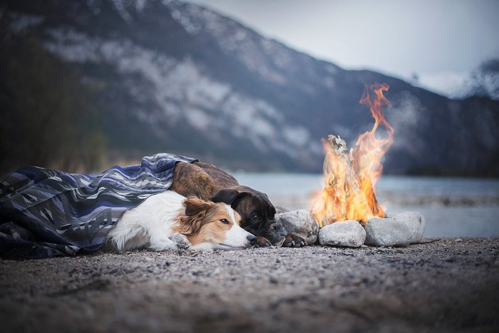 Two dogs lying down at a fire