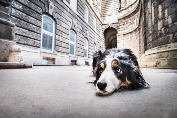Cute pet photography of a dog outdoors