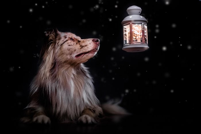 Cute pet photography of a dog outdoors by a lantern