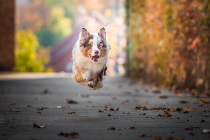 Cute photo of a dog running