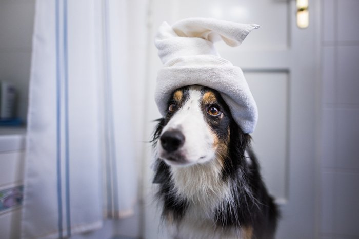 Cute photo of a dog with a towel on its head
