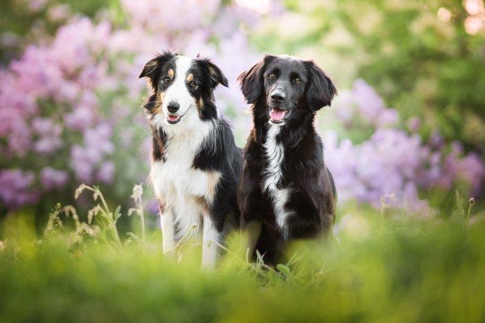 Two cute dogs in a field