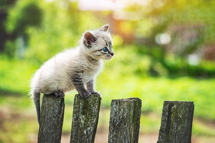 Picture of a small kitten cat with blue eyes on a wooden fence