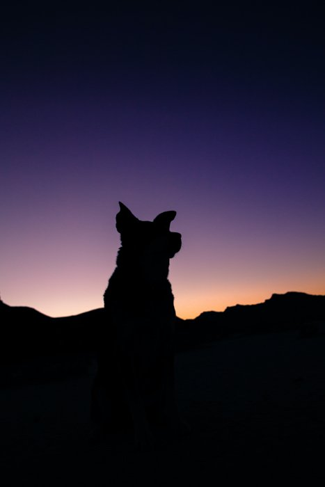 A silhouette of a black dog