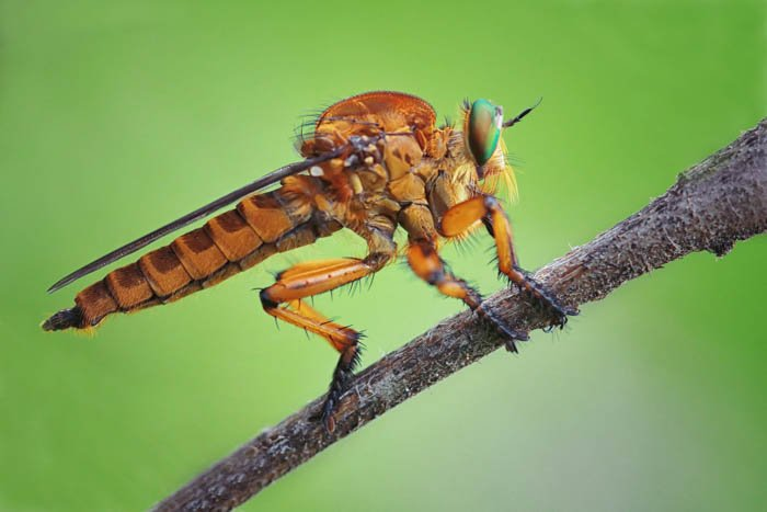 A macro photography of an insect