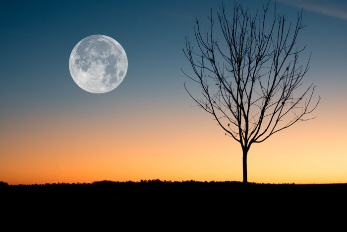Cool silhouette photo of a tree by the full moon