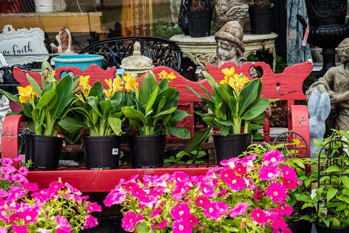 Color photograph flowers in garden center