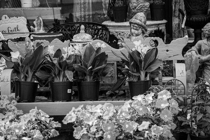 Monochrome photo flowers garden center