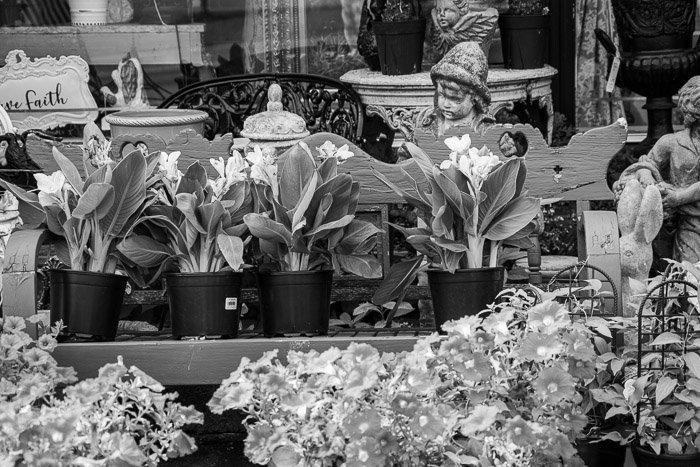 Monochrome photo flowers in garden center