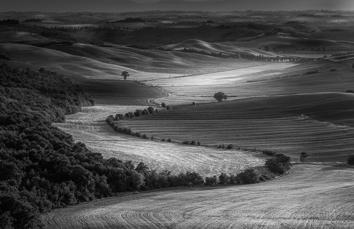 Black and white photo Tuscan field