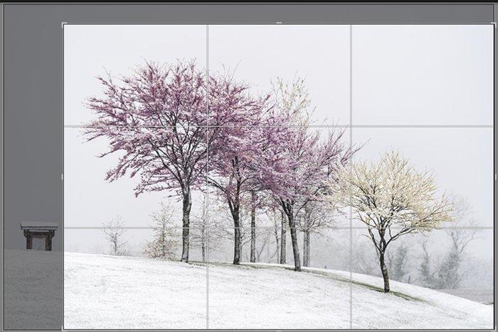 Screenshot crop of snowy spring trees