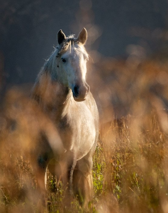 wild horse shot with a shallow depth of field