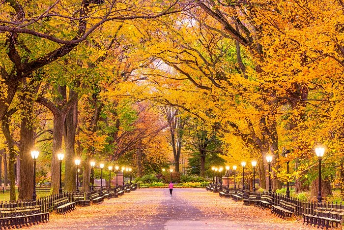 a photo of central park new york city in the autumn as a runner jogs through