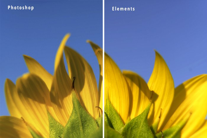 Sunflower compare Photoshop and Photoshop Elements edits