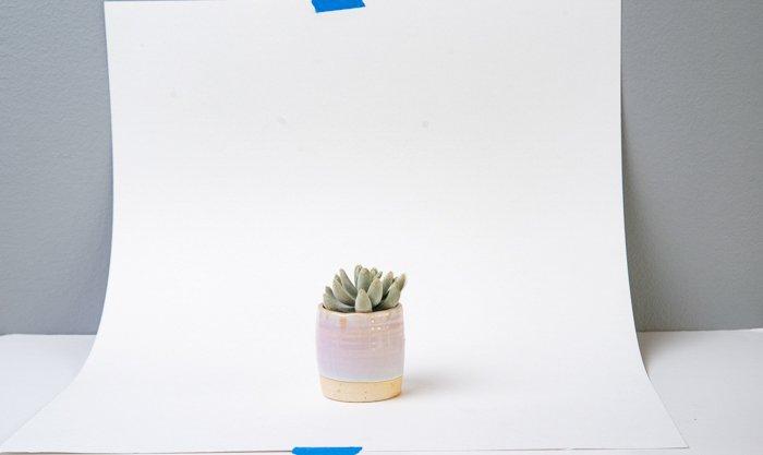 Uma planta suculenta em um fundo branco.