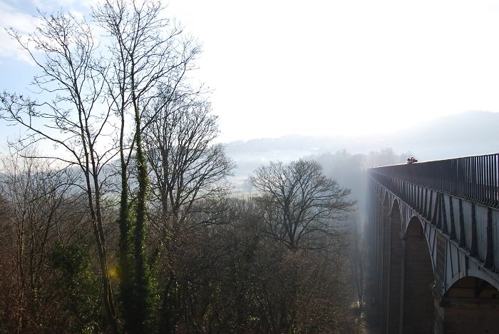 image of a forest with a bridge and foggy background