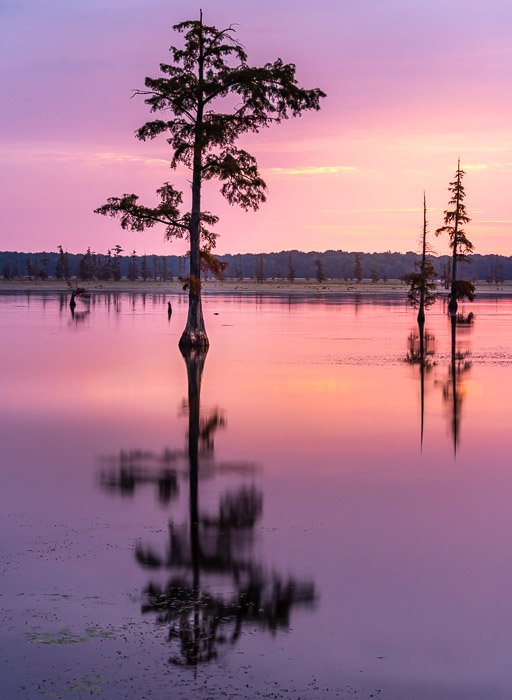 A beautiful pink sunset with trees reflected in water to show best landscape photography settings