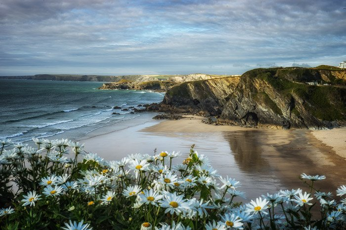 A seaside beach with cliffs in the background and flowers in the foreground to show best landscape photography settings