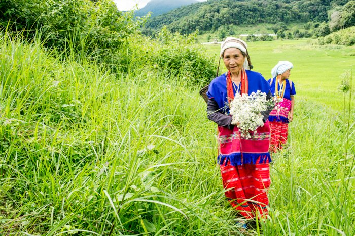 Environmental portrait of Karen hill tribe women walking in a luscious green landscape with grass and trees in the background