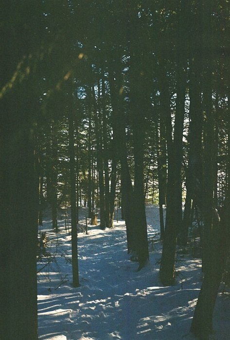 grainy image of a forest with snow