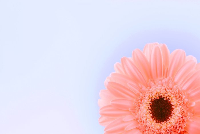 macro image of a flower
