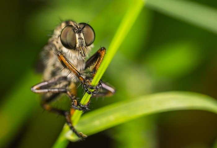 macro image of a fly on a plant