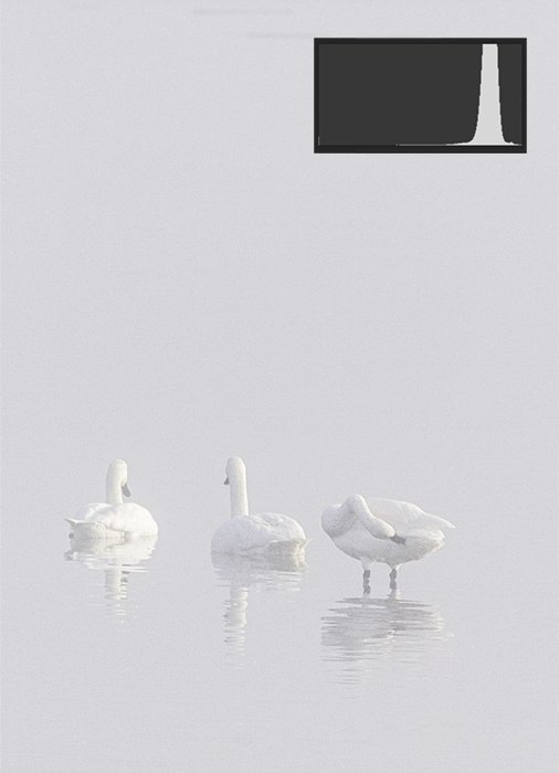 a high key and low contrast image of three swans in a lake