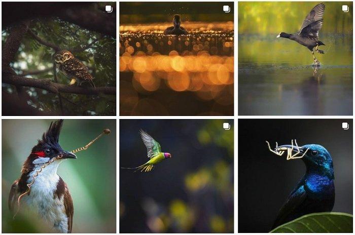 a screenshot of bird photographer Aparupa Dey instagram portfolio