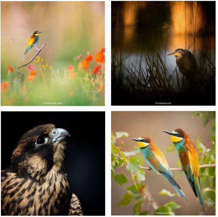 a screenshot of bird photographer Chris Kaula instagram portfolio