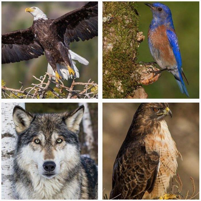 a screenshot of bird photographer Chris Montano instagram portfolio