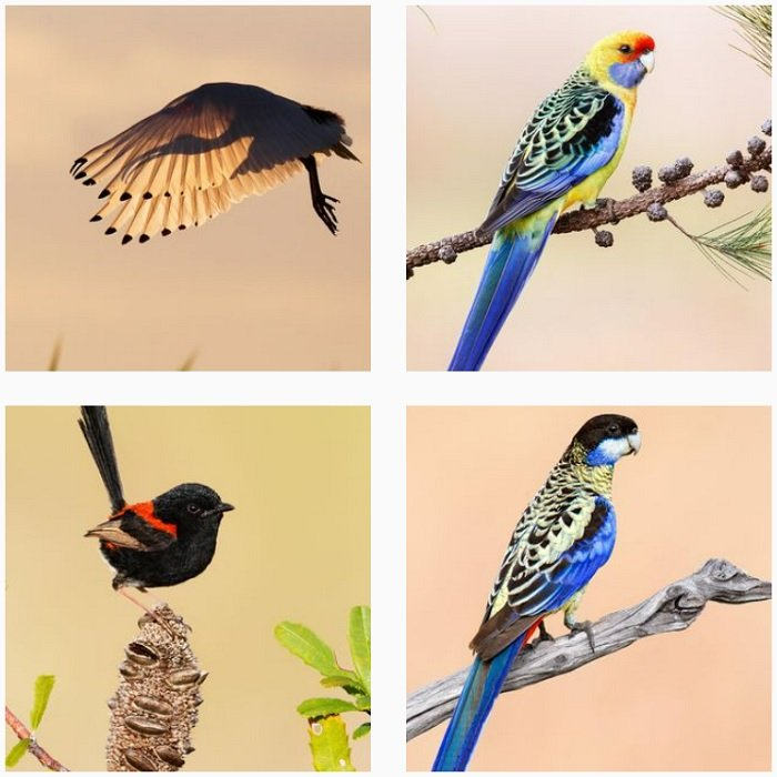 a screenshot of bird photographer Jan Wegener instagram portfolio