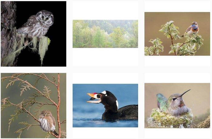 a screenshot of bird photographer Jess Findlay instagram portfolio