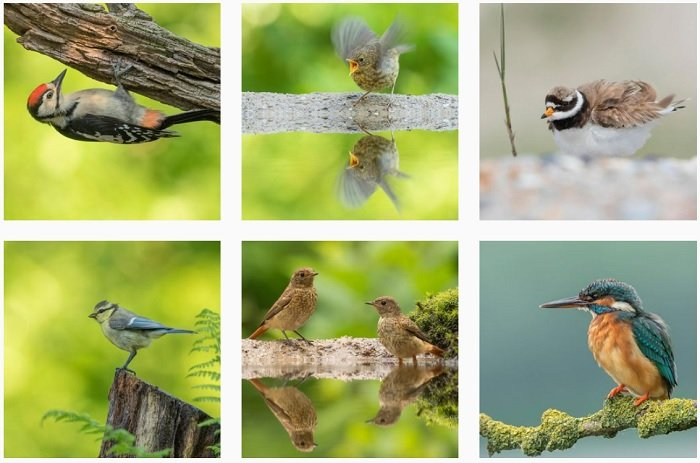 a screenshot of bird photographer Rob Van Mourick instagram portfolio