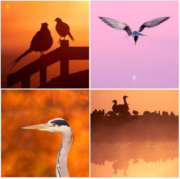 a screenshot of bird photographer Roeselien Raimond instagram portfolio
