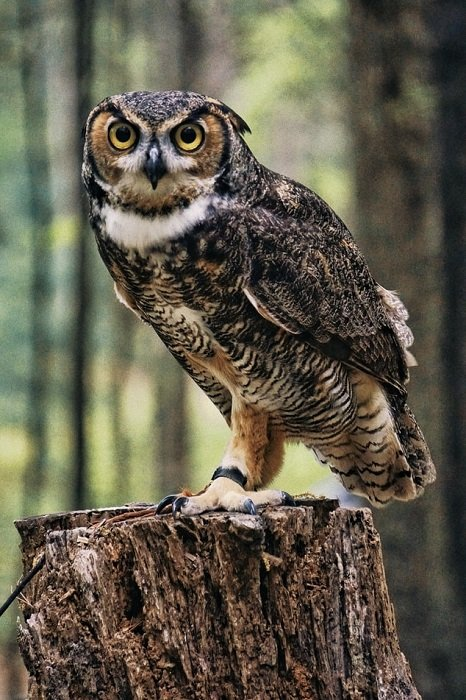 photograph of an owl perched on a tree stump