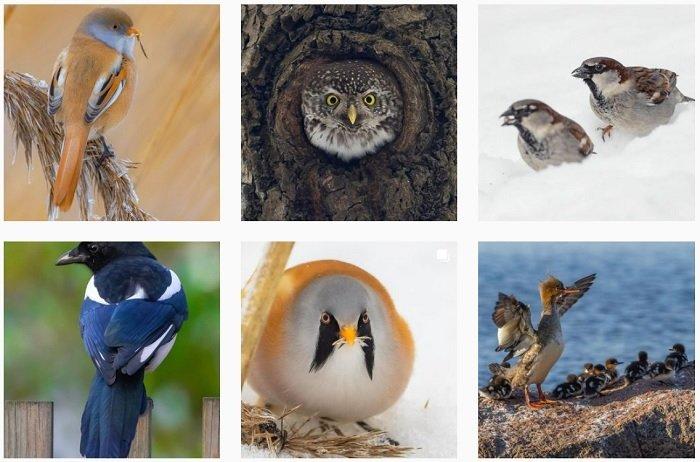 a screenshot of bird photographer Wami instagram portfolio