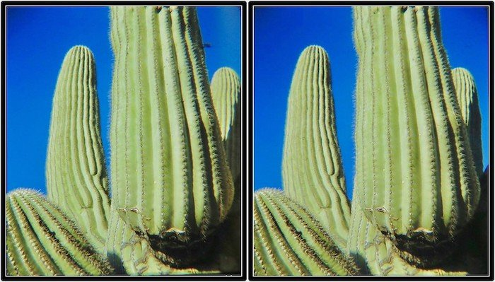 3D stereo photo of green cactuses
