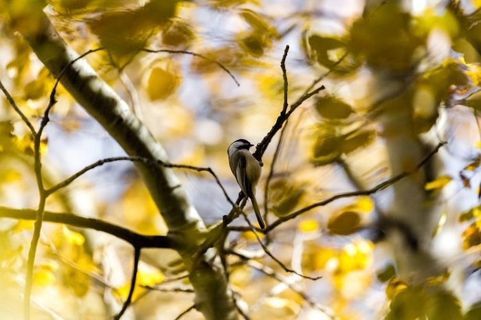 image of a bird taken in a tree at a distance using a telephoto lens