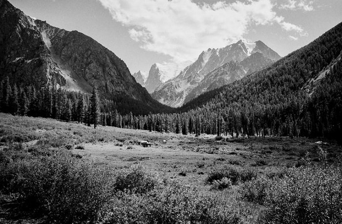 stunning and crisp black and white films photograph of a mountain forest