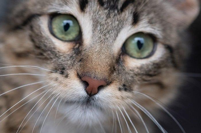 一只猫的特写镜头图象使用宏观透镜的