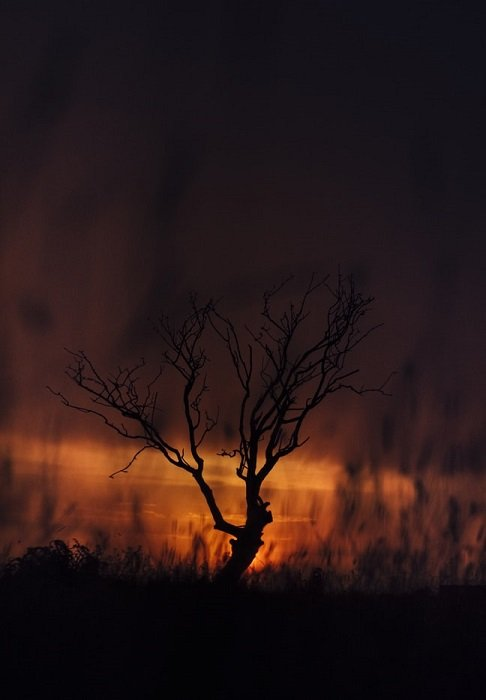 exotic savannah scene taken in low light