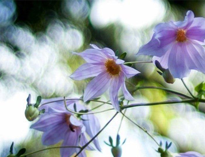 flowers field curvature