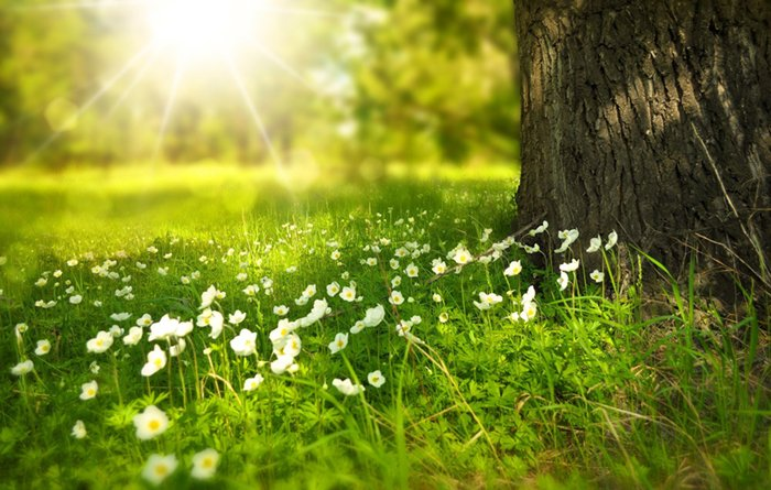 A burst of sunlight on flowers and grass beside a tree trunk showing natural light photography