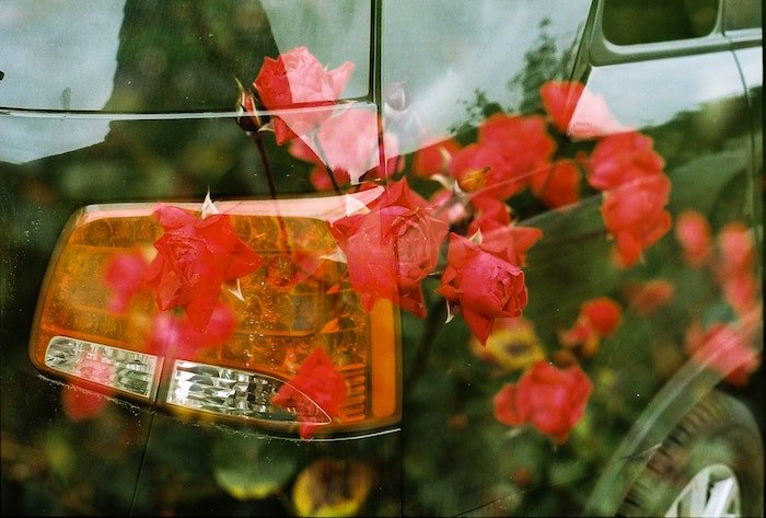 Two images of red roses and the side back view of a car superimposed against one another to make one image.
