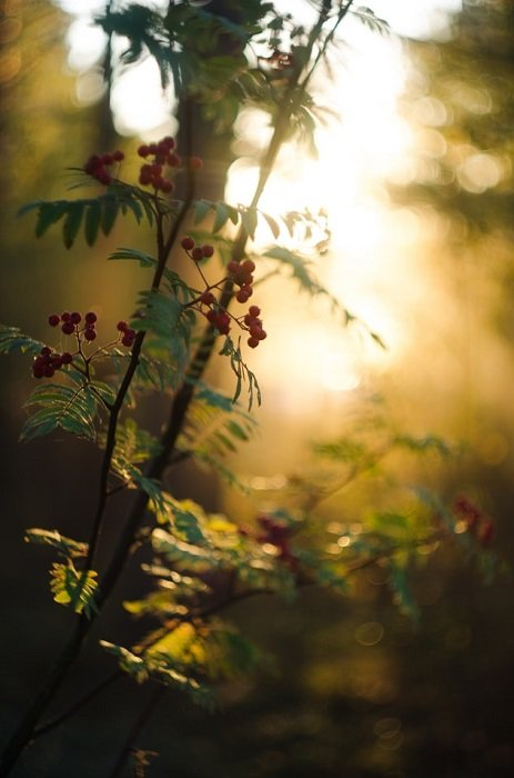bokeh effect on a tree branch with berries