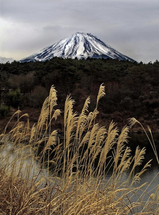 wheat grows in front of a snow-capped mountain - landscape photography