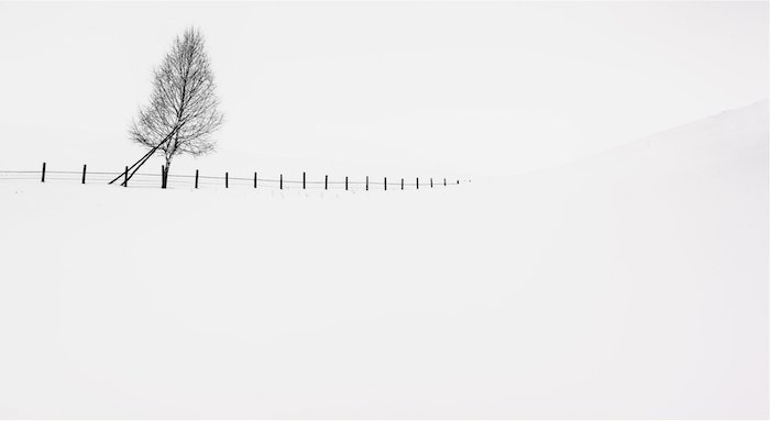 minimalist landscape photography: a lone tree and fence in a snowscape