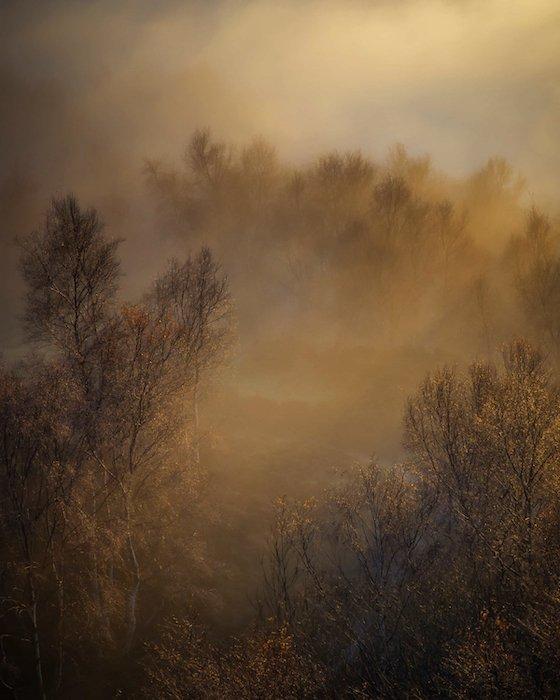 mystical landscape photography idea: trees peeking through the fog