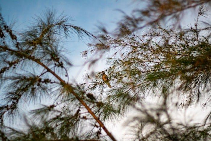 一只小鸟在树上。