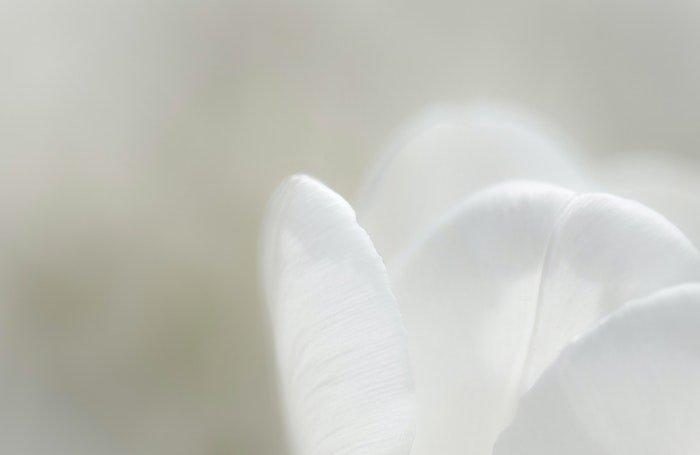 特写微距照片的四个白色的花瓣在焦点与模糊的绿色背景